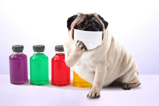 マスク姿の犬